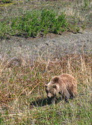 A Kodiak Moment by WanderingSpirit0890