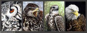 Birds of prey 2 by Kirsch-vanderWit