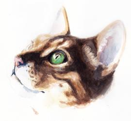 Cat by JimJamDavis