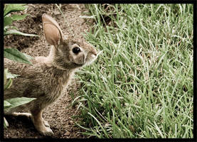 curious bunny. by ohconspiracy