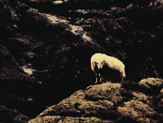 lamb by spin-city
