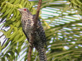 Unknown bird - shot 2 by Shysagittarius