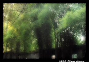 Bamboo Forest by engine-kyo