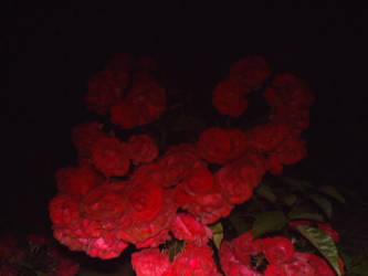 darkspace nightroses by ret784