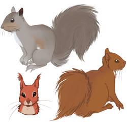 Squirrels by Niluki