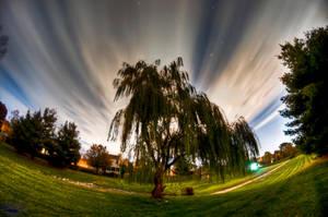 Long Tree by BiOzZ