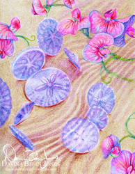 Sand Dollars and Sweet Peas by FamiliarOddlings