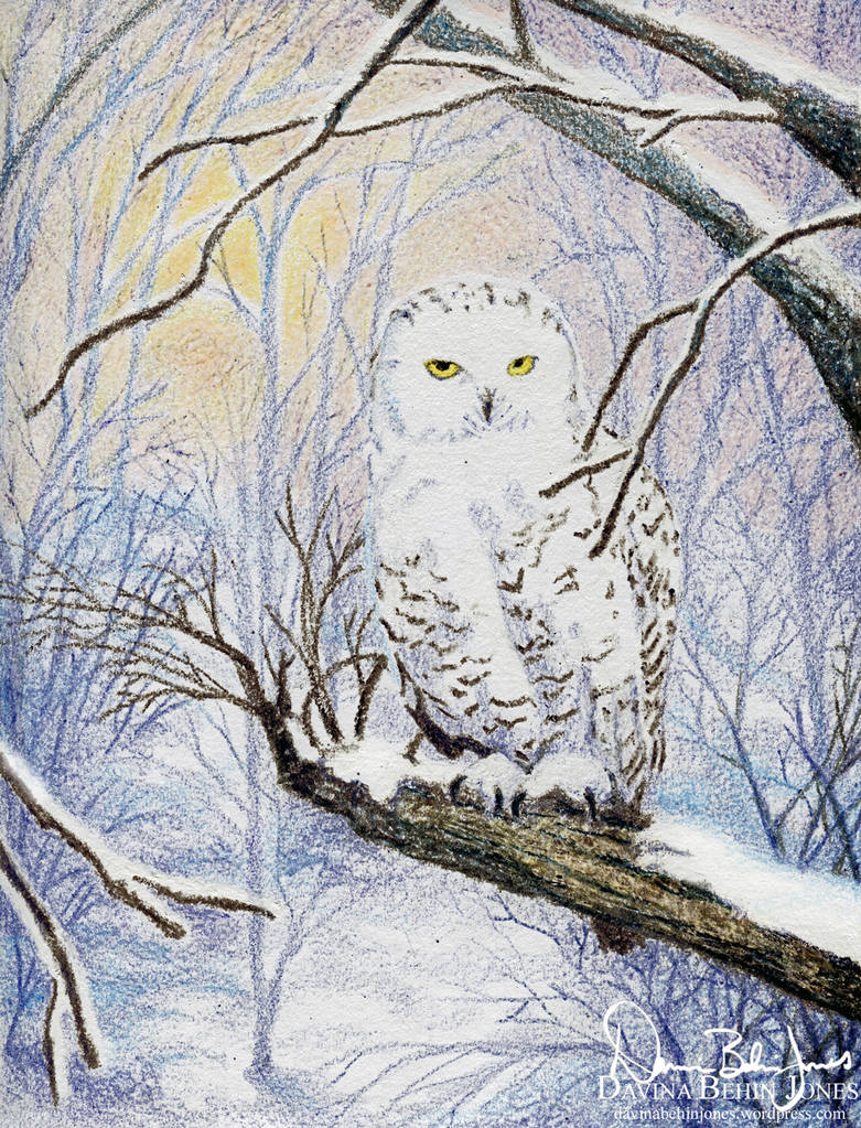 Snow Owl Holiday Card by FamiliarOddlings