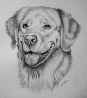 Golden Retriever Portrait by Ned-The-Hat