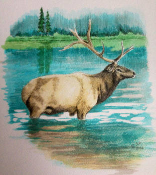 Ink Elk landscape drawing by Ned-The-Hat