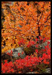Colours of autumn by alfakroell