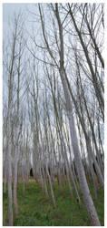 Trees by PRibeiro