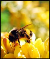 Bee by PRibeiro