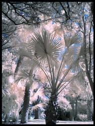 Sorcerer Palm by Phostructor