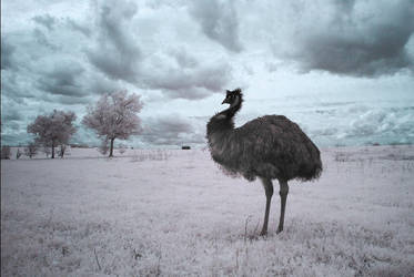 Yes, Austin, this is an Emu by Phostructor