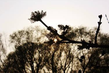 When Nature wakes up by Irukami
