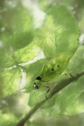 Ancylecha in bramble bush by Elwetritsche