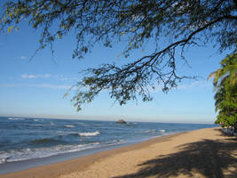 Beach under the tree by teft