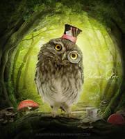 Wacky owl by jugatatinhas