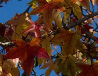Fall Leaves by Nilegurl20