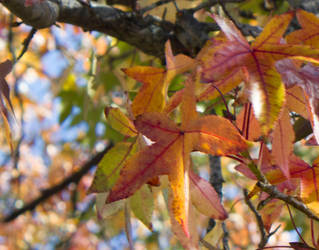 Fall Leaves 2 by Nilegurl20
