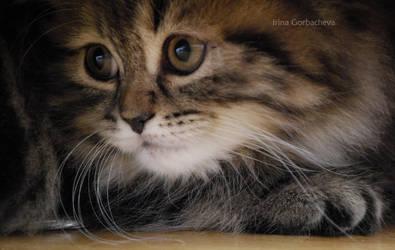 cute cat by Irina-Gorbacheva