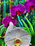 glowing orchids by hippiechick6979