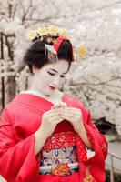 maiko makeover: cherry blossom by moonlightspirit