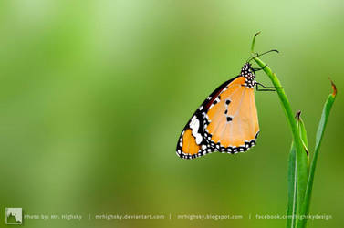 Monarch Butterfly by MrHighsky