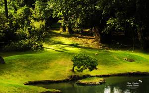 Zen Garden by AndreaAndrade