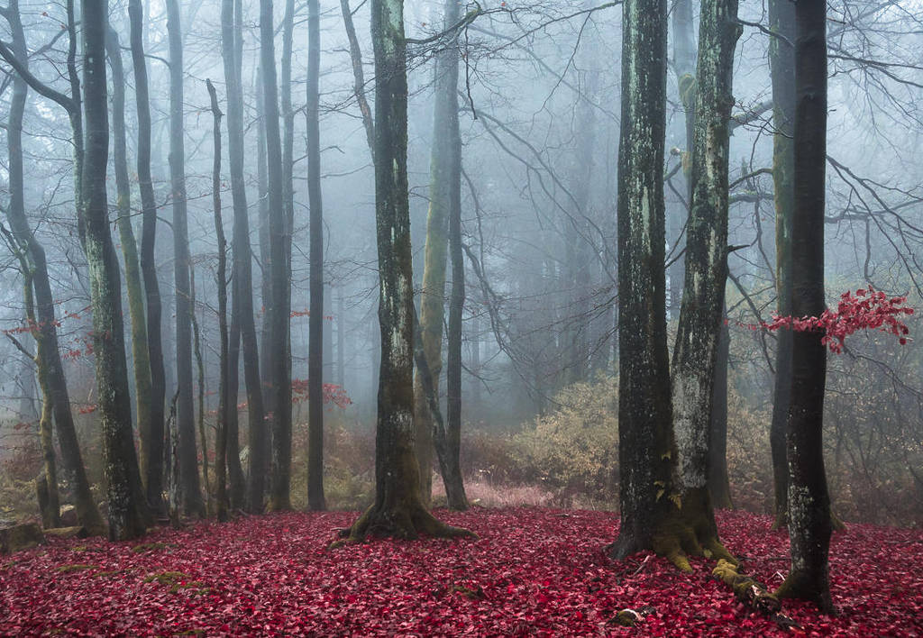 Blood on the dancefloor by aw-landscapes