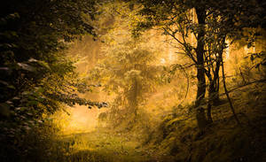 Golden path by aw-landscapes