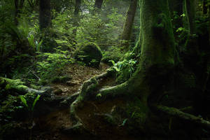 The Old Forest by aw-landscapes