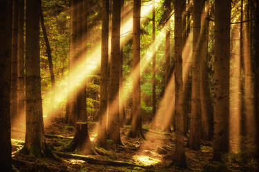 Beaming forest by aw-landscapes