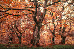 The Blood Grove by aw-landscapes
