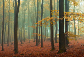 Golden Brown by aw-landscapes