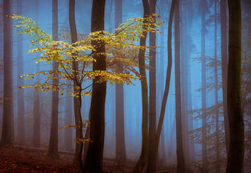 Shadow land by aw-landscapes