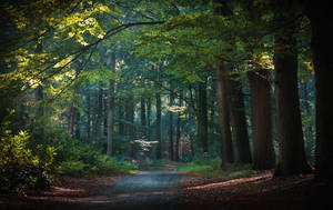 Hunting grounds by aw-landscapes