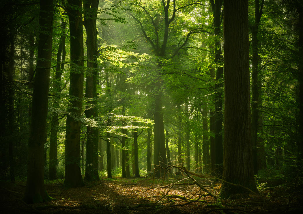 The green planet by aw-landscapes