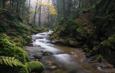 Black Forest stream by aw-landscapes