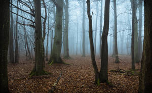 Spooky by aw-landscapes