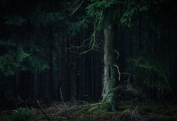 Where Darkness rules by aw-landscapes