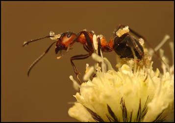 Ant by Tamyl91