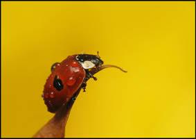 wet ladybird by Tamyl91