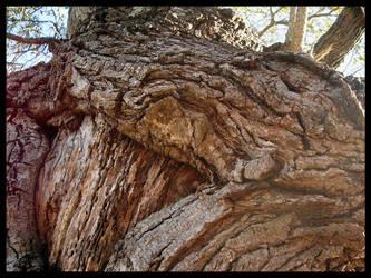 Wrinkled Bark by Enty
