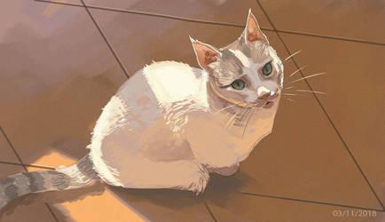 Cat light study by chutkat