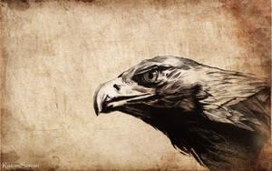 Eagle drypoint by Razor-Sensei