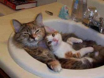cute by kitten333