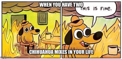 Basically Me by SilverKunoichi1212