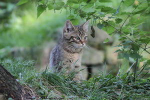 wildcat baby by Twins72